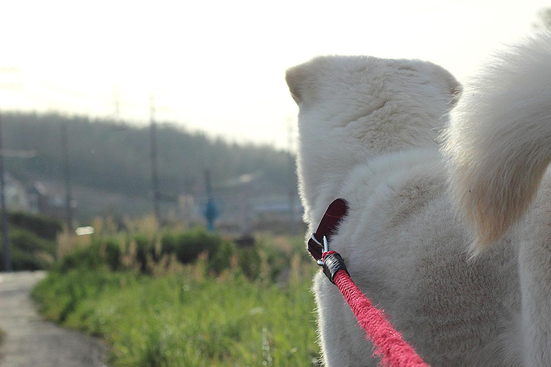 【柿塚】おすすめ散歩コース